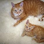 Mini Me   Cats