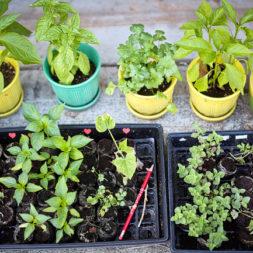 Planting an Herb Garden | 30 before 30 Goals