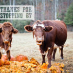 Pumpkin Shooting at Chattanooga National Forest | Fall Checklist