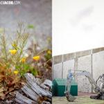 Christchurch New Zealand | The Rebirth
