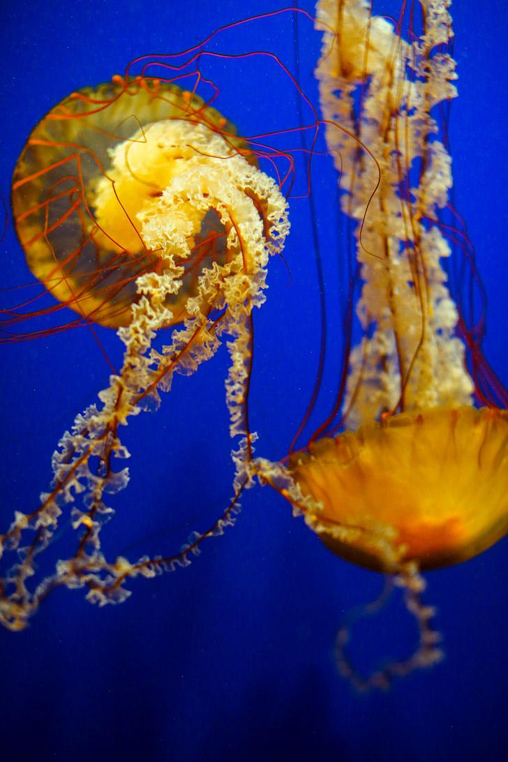 Georgia Aquarium - World's Largest Aquarium // localadventurer.com