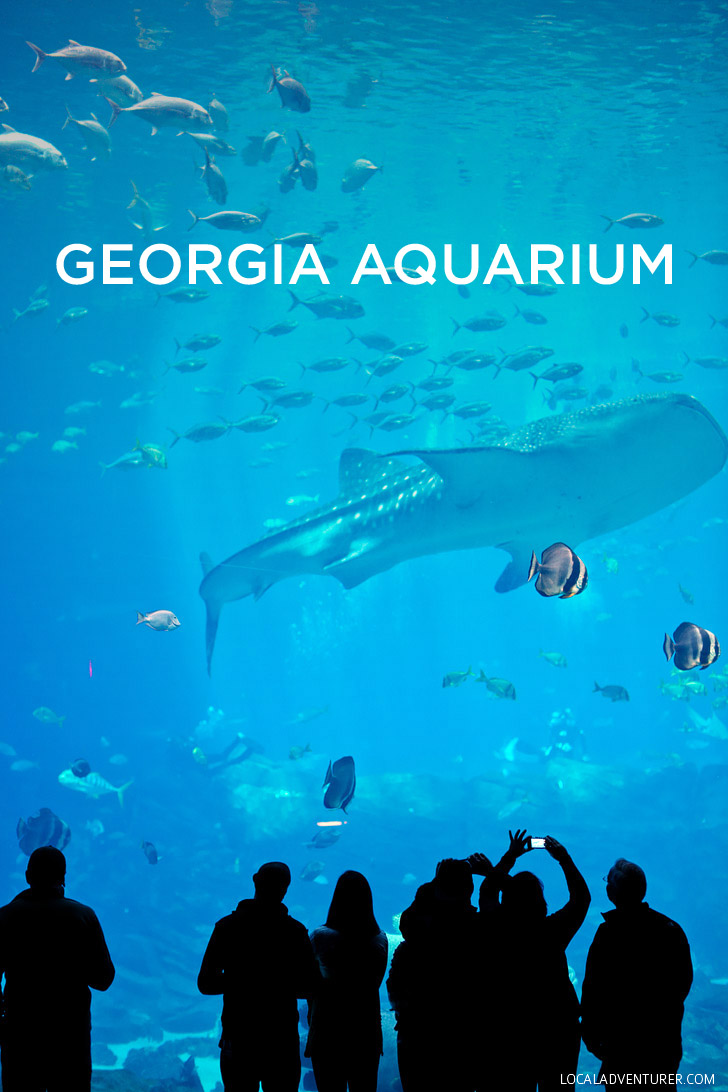 The georgia aquarium atlanta ga world 39 s largest aquarium Aquarium in georgia