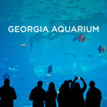 The Georgia Aquarium Atlanta GA – World's Largest Aquarium