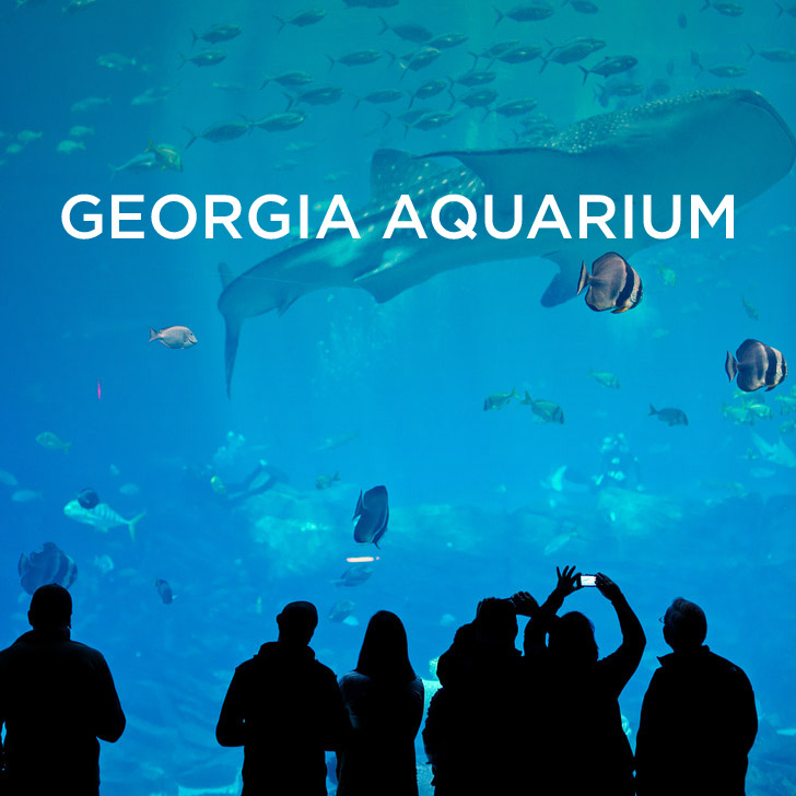World S Largest Aquarium The Georgia Atlanta Ga