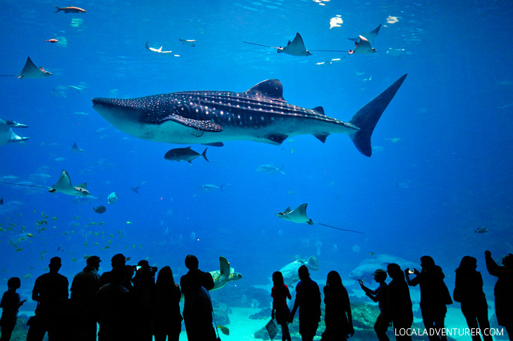 Best Things to Do at the Georgia Aquarium – Downtown Atlanta Attractions