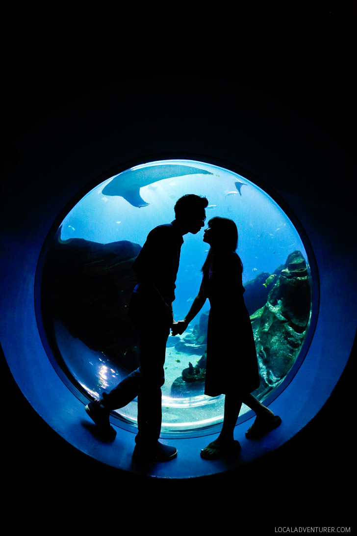 The Aquarium in Atlanta is the Second Largest Aquarium in the World // localadventurer.com