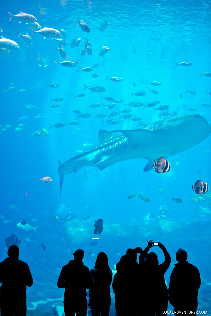 The Second Largest Aquarium in the World // localadventurer.com