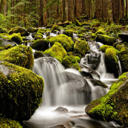 Olympic National Park WA | Sol Duc Falls
