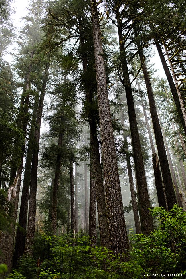 sol duc falls. sol duc olympic national park wa. hiking in olympic national park. the olympic national park washington.