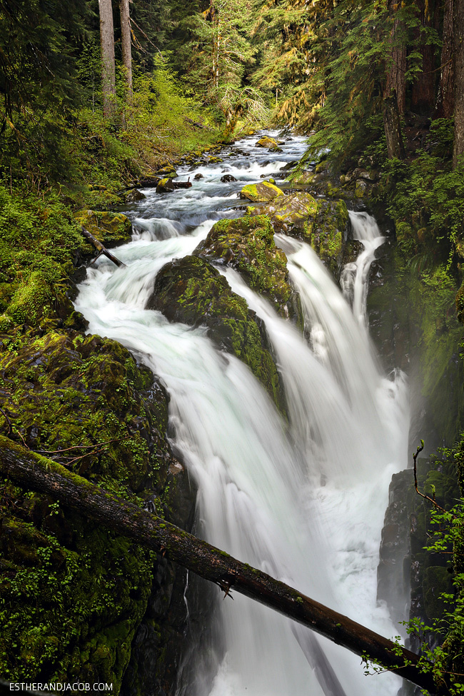 sol duc falls trail. sole duck falls. medina falls washington. what to see in olympic national park washington. olympic national forest.