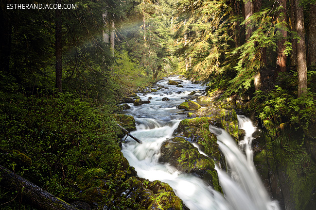 sol duc falls trail. sole duck falls. medina falls wa. what to see in olympic national park washington. olympic national forest.