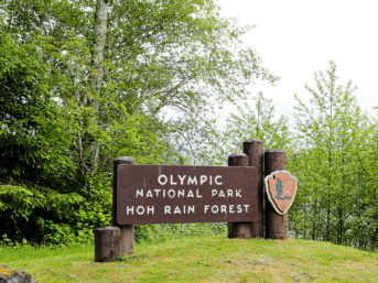 olympic national park entrance sign. hoh rainforest. hoh rain forest. the olympic rainforest. hoh river rainforest. hoh rainforest washington. olympic national park wa