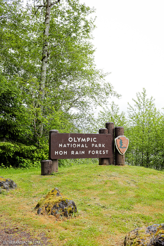 4 Things to Do in Olympic National Park Washington
