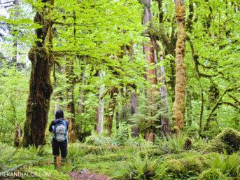 hiking the hoh rainforest trail. hoh rain forest. the olympic rainforest. hoh river rainforest. hoh rainforest washington. olympic national park wa