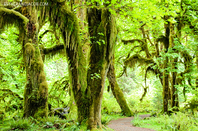 4 Things to Do in Olympic National Park Washington: Hall of Mosses.