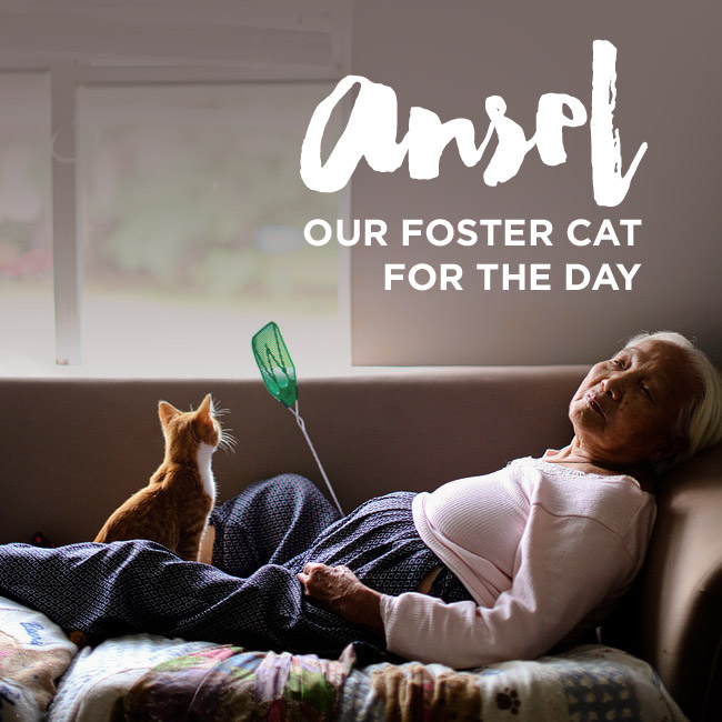 Ansel Our Foster Cat For the Day