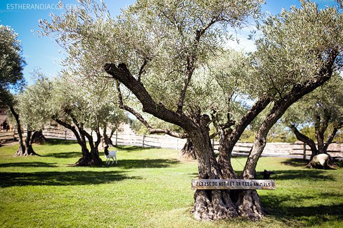 Napa Valley Wine Tasting | Castello di Amorosa Winery.