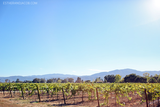 day trip to napa valley from SF. castello di amorosa winery. castello di amorosa napa. castle di amorosa. napa valley ca. visit napa. nappa valley. castello di amorosa hours. castello di amorosa address.
