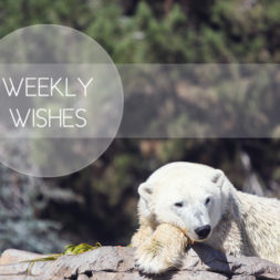 Weekly Wishes = Weekly Goals