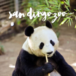 10 Best Tips for Navigating the San Diego Zoo