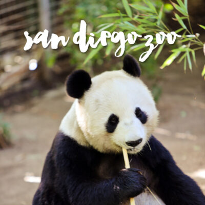 10 Tips to Navigating the San Diego Zoo.