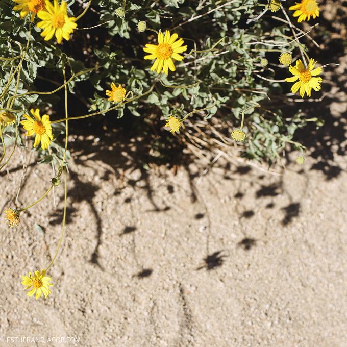 Skull rock joshua tree np. joshua tree national park california. joshua tree park. the great outdoors.