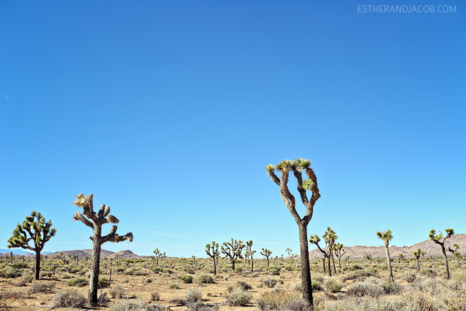 9 things to do in joshua tree. what to do in joshua tree national park. joshua tree pictures. joshua tree np. joshua tree hiking. joshua tree images.