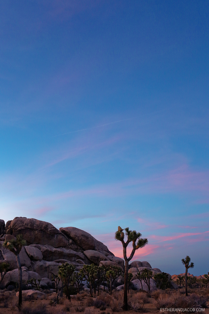 Hall of Horrors Joshua Tree NP. Picture of a joshua tree. Sunset at joshua tree photos. Joshua tree pictures. Photos of sunset at joshua tree park.