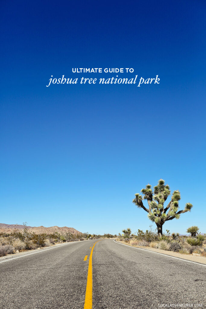 Ultimate Guide to Joshua Tree National Park California