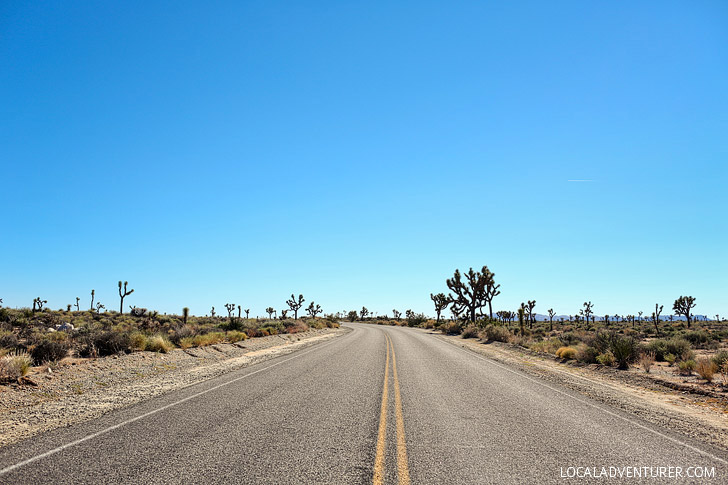 Driving Joshua Tree National Park California // localadventurer.com