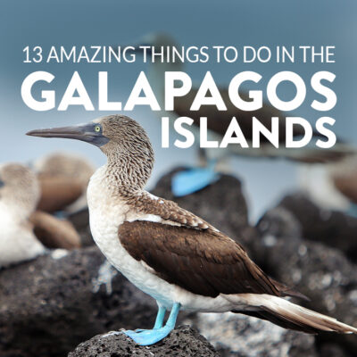 Are you visiting the Galapagos Islands? Save this pin and click through to see more details on the 13 best things to do in Galapagos Islands. This post includes the top Galapagos Islands activities, what to see, best places to see wildlife, and essential tips for your visit, and more // Local Adventurer #galapagosislands #galapagos #ecuador #southamerica