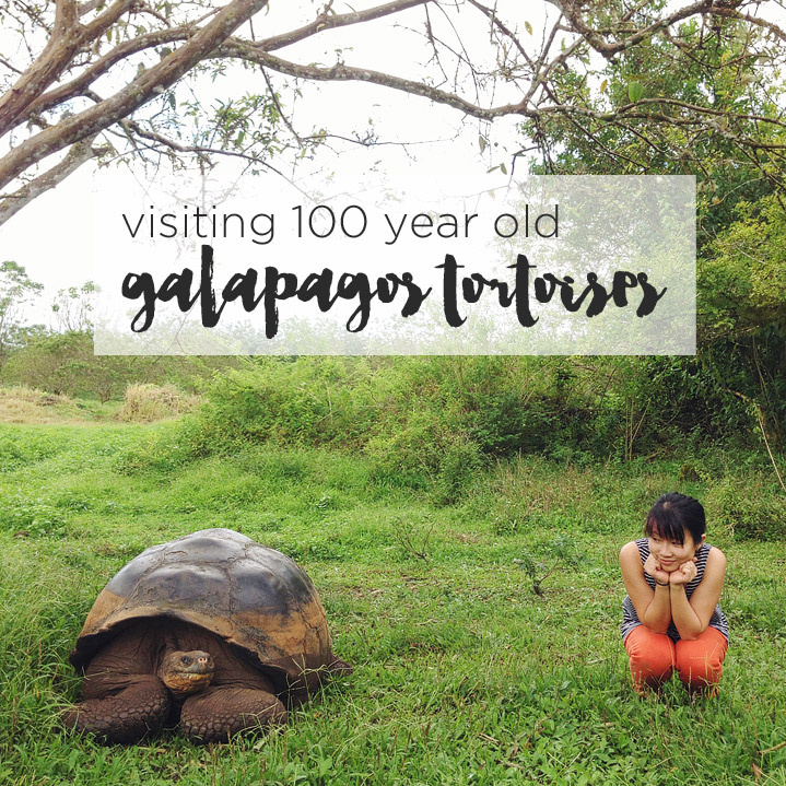 13 Things To Do In The Galapagos Islands Amp Tips For Your Visit