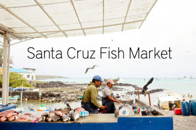 The Santa Cruz fish market in the city of Puerto Ayora.