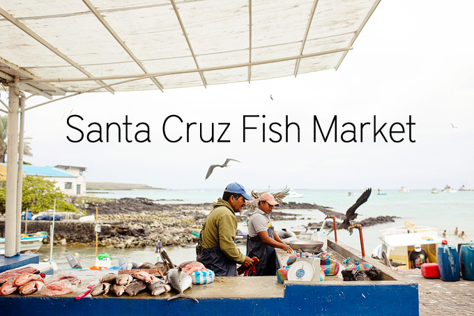 Santa cruz fish market puerto ayora gal pagos islands for Santa cruz fishing