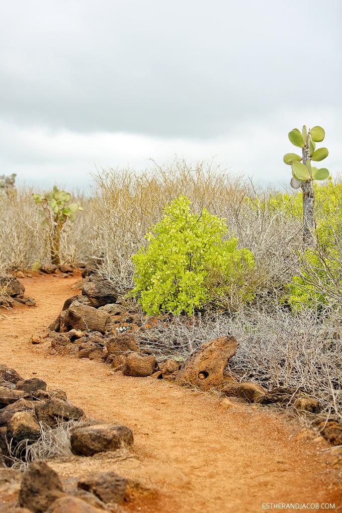This is the hike to Playa de Los Perros on Santa Cruz Island.