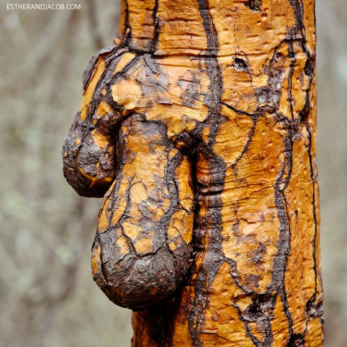 Tree balls?