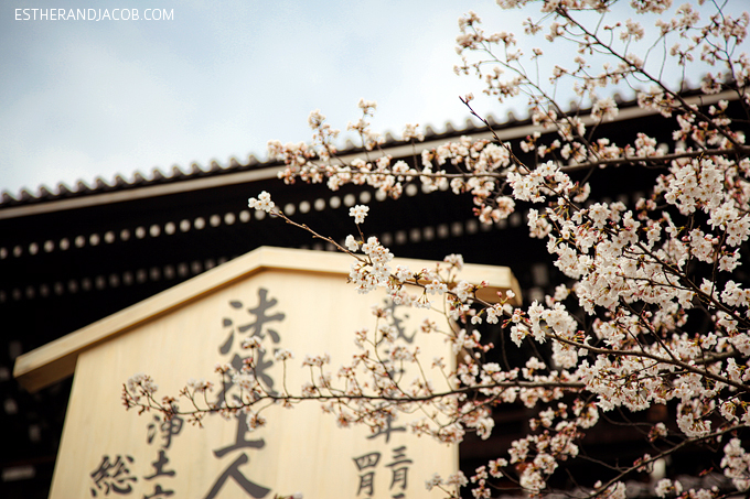 Photo of Japanese cherry blossoms.