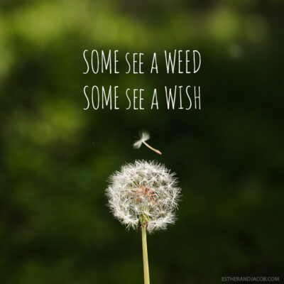 Some see a weed some see a wish quote | Dandelion images | Pictures of spring season.