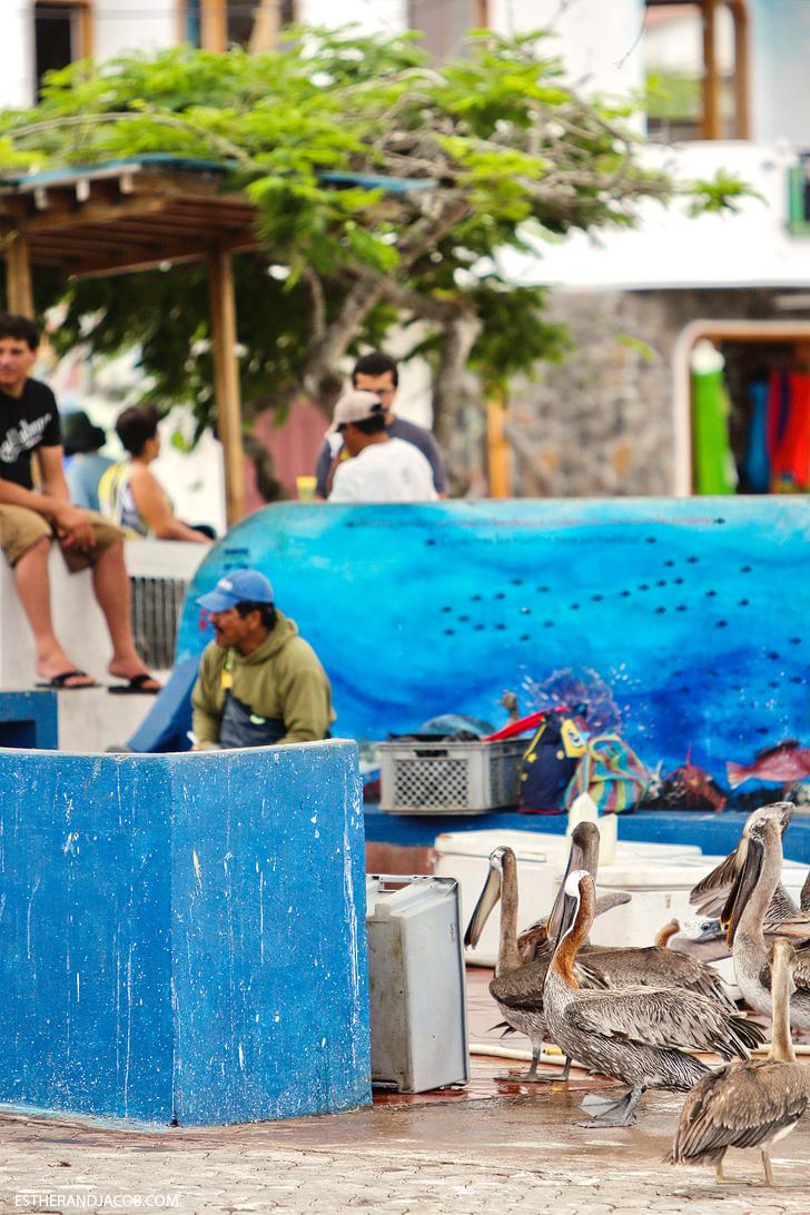 Puerto Ayora Fish Market | Things to do in santa cruz galapagos island.