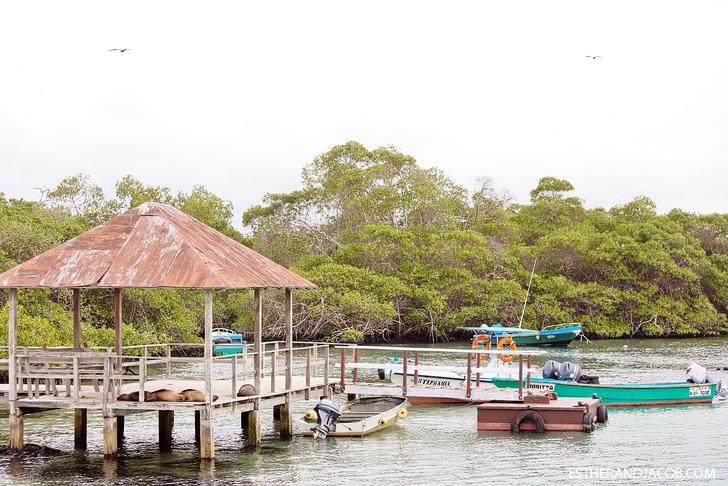 Isabela island galapagos sea lions lounging.