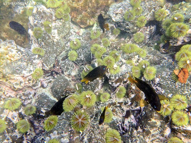 Snorkeling on Isabela Island | Galapagos Fish | Galapagos Island Animals.