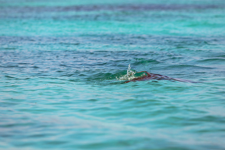 Galapagos Turtle | Galapagos Island Animals | Bay Tour of Isabela Island.