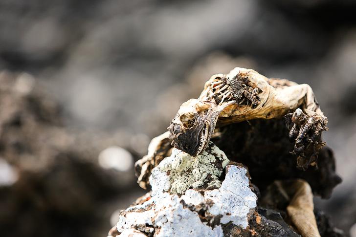 Galapagos Marine Iguanas | Bay Tour of Isabela Island