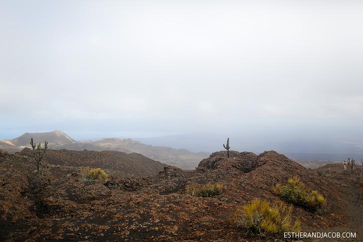 Jasminocereus thouarsii (Candelabra Cactus) | Volcán Chico, Sierra Sierra Negra Volcano Hike on Isabela Island.