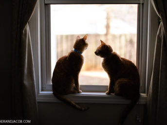 Our Two Orange Tabby Cats from Furkids.