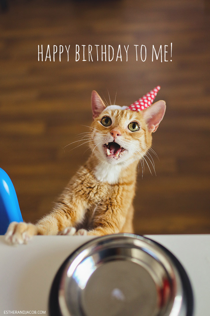 A Cat Birthday Celebration!