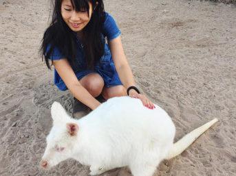 Albino Kangaroo at Roos n More Zoo in Las Vegas NV.