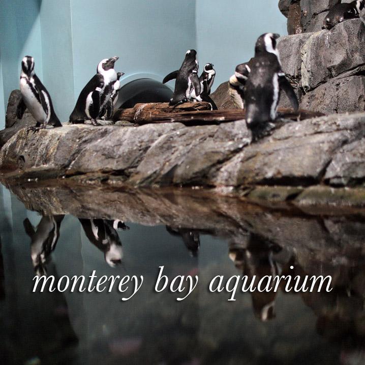 The Monterey Bay Aquarium California + Ticket Giveaway