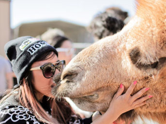 Camel Kiss at Roos n More Zoo.