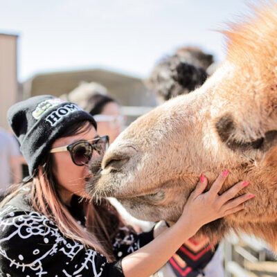 Camel Kiss at Roos n More Zoo.
